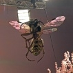 BT Mobile - Giant Wasps